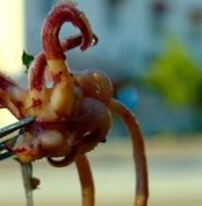 Recette des calamars à la tomate
